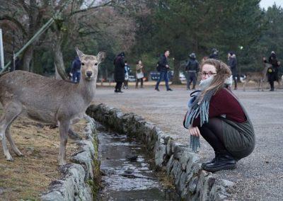 Polite deers